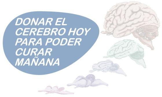 Instituto de Neurociencias: Donar el cerebro hoy para poder curar mañana